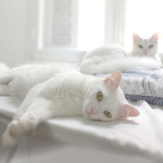Gatinhos Espetacular